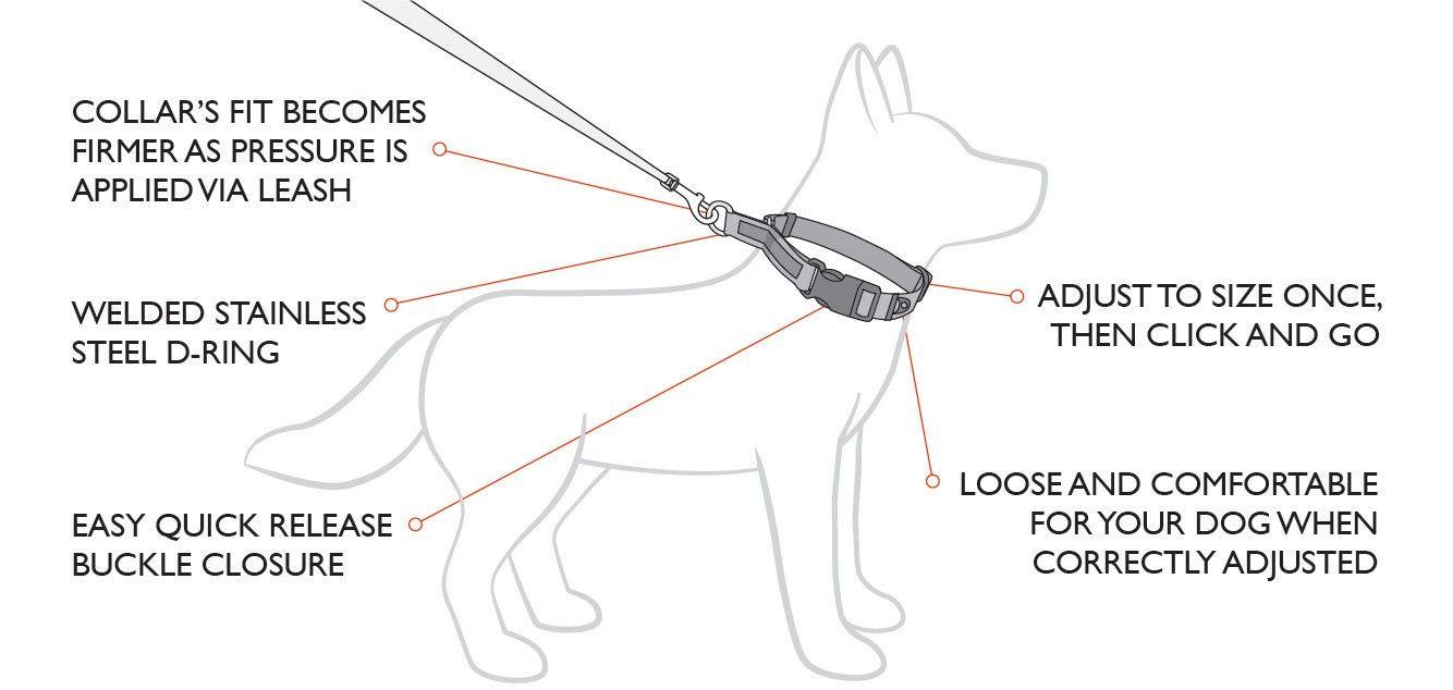 Checkmate Nylon Halsband mit Zugstopp - Schlupfhalsband, Retriever Halsband und Dressurhalsband für kleine, mittlere und große Hunde